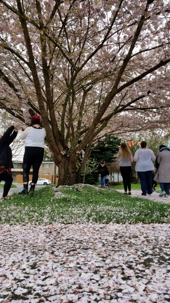 Taking photos of flowering trees with Native Girls Code families